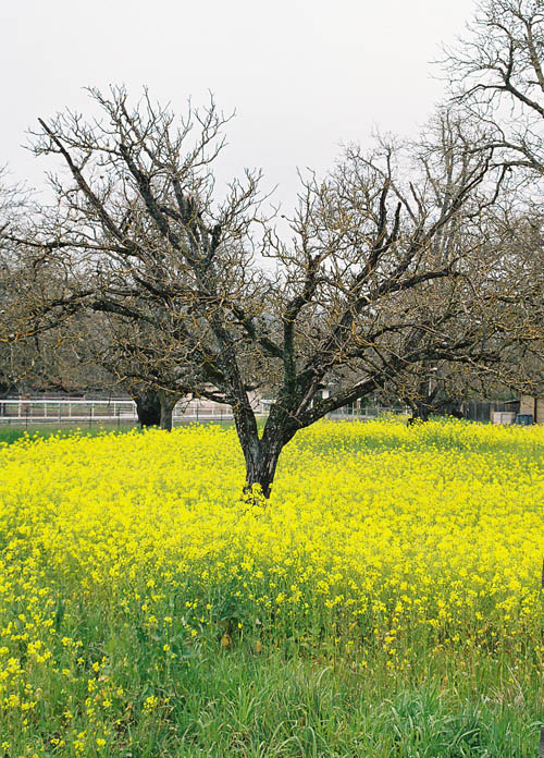 tree with mustard