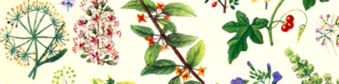 Herbal border