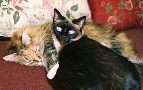 Sweet Pea and Luna