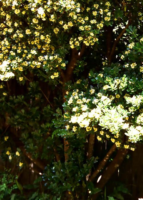 tree w/ nest