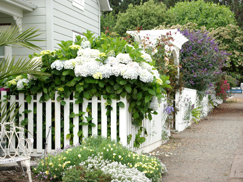 Plant Whatever Brings You Joy 187 The White Picket Fence