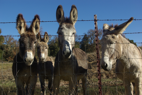 Donkey5