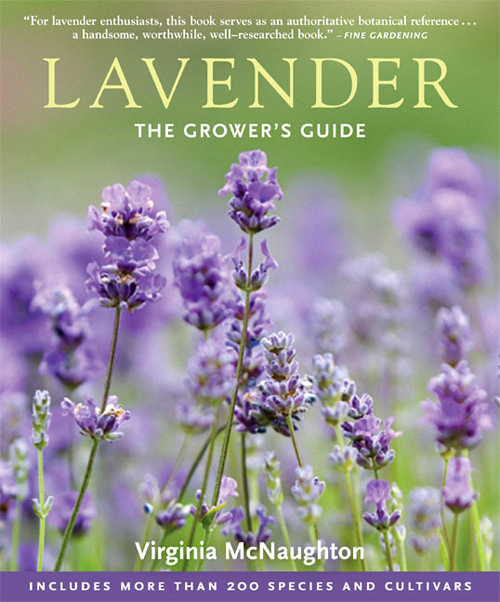 lavendercover