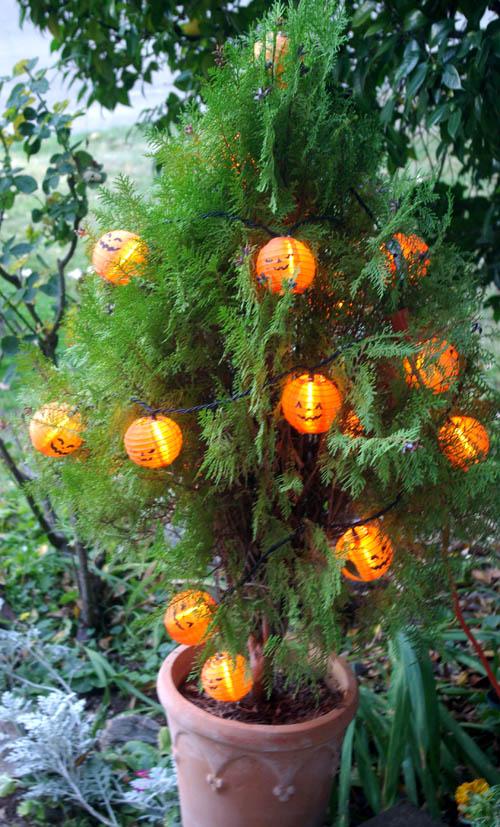 pumpkintree