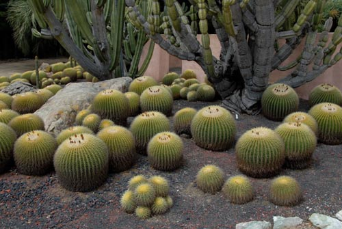 cactus500